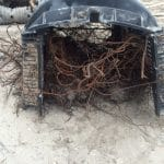 Septic System Roots
